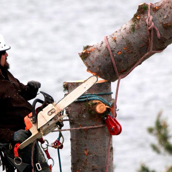 Удаление деревьев с завешиванием